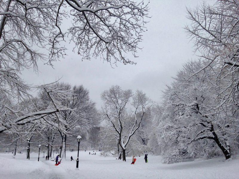 Central Park, New York, NY