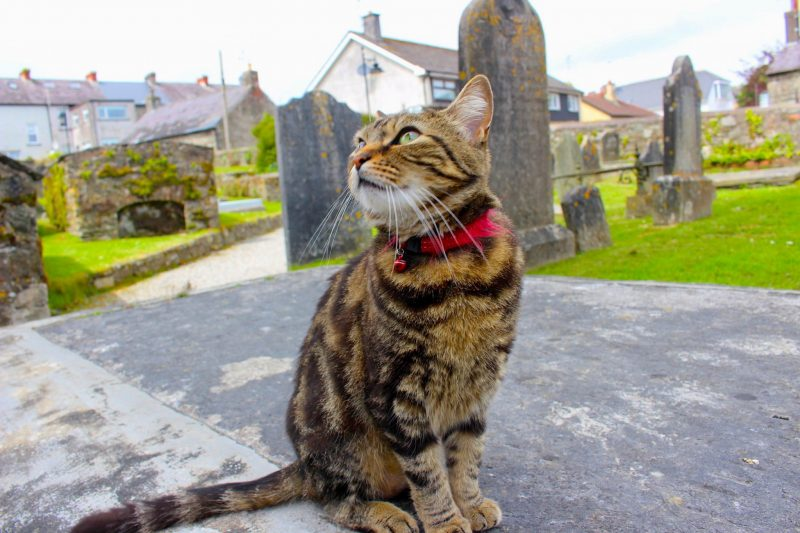 Kitty, Kinsale, Ireland