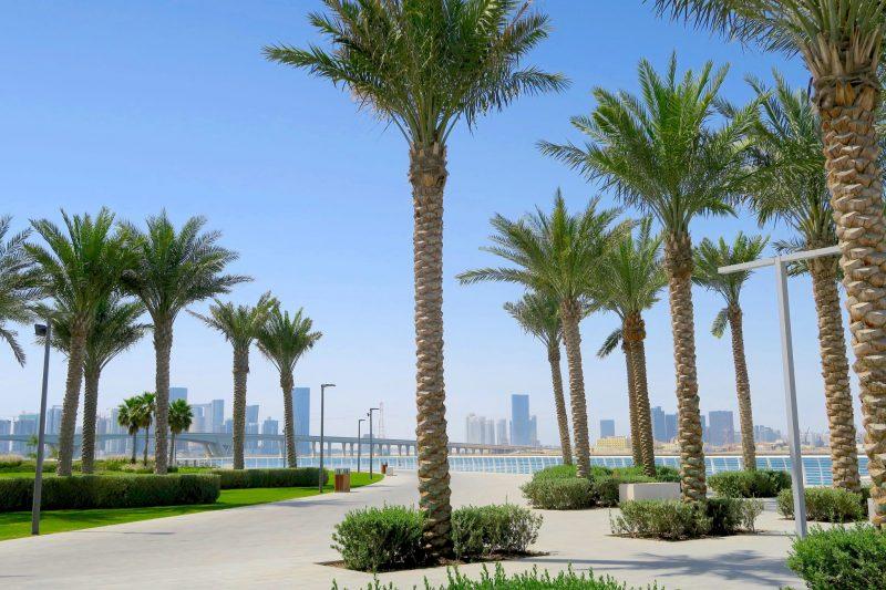 Palm trees near the Louvre Abu Dhabi